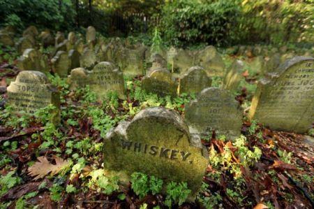 Лондонское кладбище домашних животных (8 фото + 1 видео)