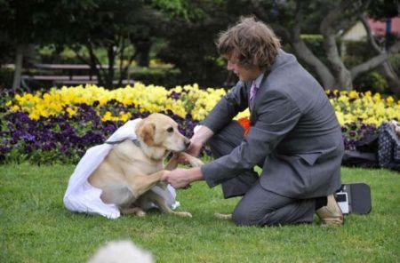 Австралиец играет свадьбу со своей собакой (17 фото)