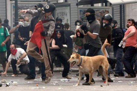 Пёс бунтарь по кличке Сосиска (36 фото)