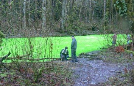 Предновогодняя шутка на реке Goldstream River (10 фото + 2 видео)