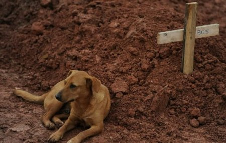 Верный пёс по кличке Leao (3 фото)