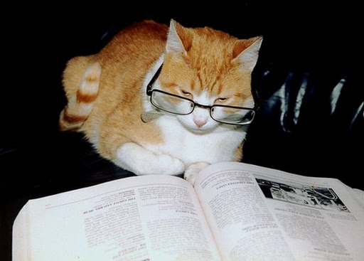 http://www.mirinteresen.net/uploads/posts/2012-01/1327603164_cats-wearing-glasses-34.jpg